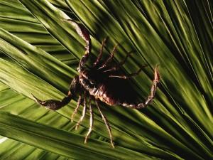 Un escorpión camina sobre unas hojas verdes