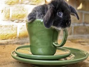 Conejo en una taza