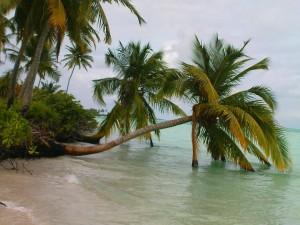 Palmeras tropicales sobre las aguas del mar