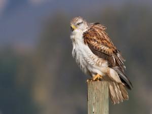 Hermoso halcón posado en un tronco
