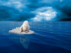 Oso polar en una placa de hielo