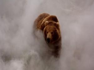 Oso caminando entre la niebla