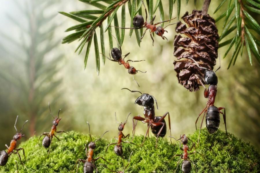 Hormigas trabajando bajo la luz del sol