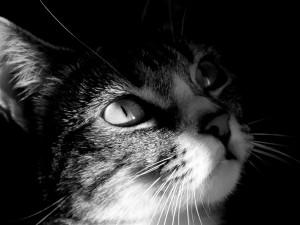 Luz y sombra en la cara del gato