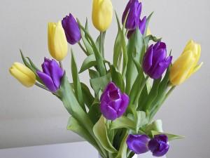 Tulipanes color amarillo y púrpura en un recipiente
