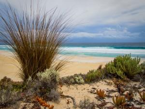 Plantas en la playa