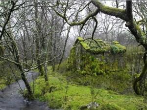 Cabaña cubierta de musgo junto al río