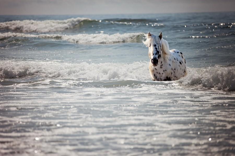 Un caballo caminando entre las olas del mar