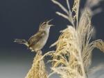 Pájaro cantando sobre una planta