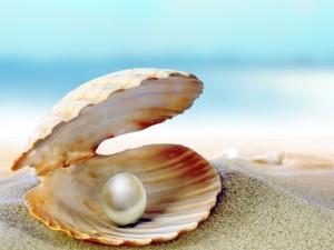 Concha con una perla