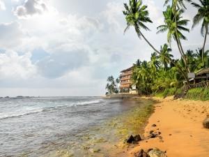 Casas y palmeras a orillas del mar