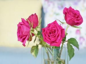 Rosas en un florero de vidrio