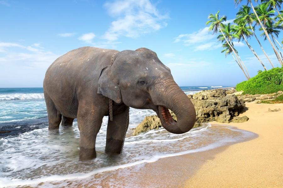 Elefante tomando agua a orillas de la playa