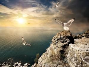 Aves revoloteando en el mar