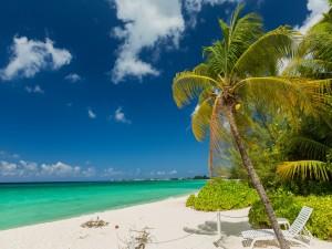 Tumbona bajo una palmera frente al mar