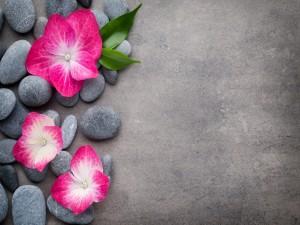 Flores sobre piedras