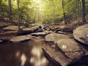 Grandes rocas en el cauce del río