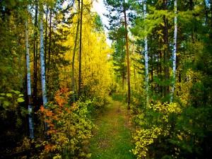 Camino de acceso al bosque