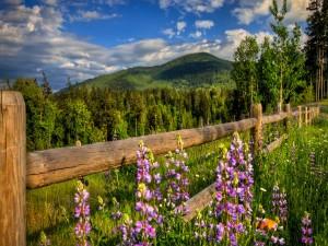 Flores junto a una valla