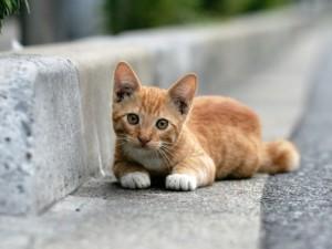 Gato tumbado en la carretera