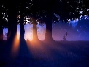 Ciervo en el bosque disfrutando de los primeros rayos de sol
