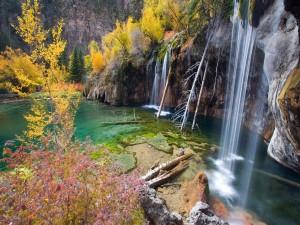 Ramas caídas junto a una cascada