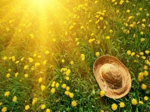 Sombrero sobre una flores amarillas iluminadas por los rayos del sol