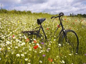 Bicicleta entre las flores silvestres del campo