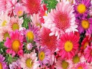 Esbeltas y coloridas flores