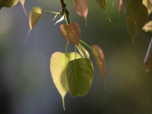 Hojas colgadas de una rama