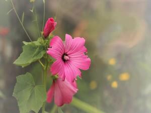 Delicadas flores color rosa en una rama