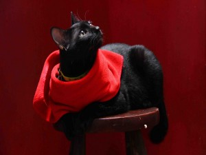 Gato negro con un pañuelo rojo tumbado sobre un banco