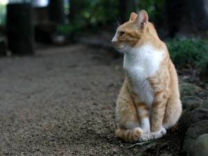 Perfil de un gato sentado