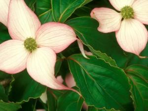 Hermosas flores entre hojas verdes
