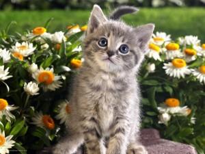 Gatito junto a las margaritas