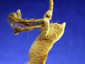 Gato jugando con una cuerda