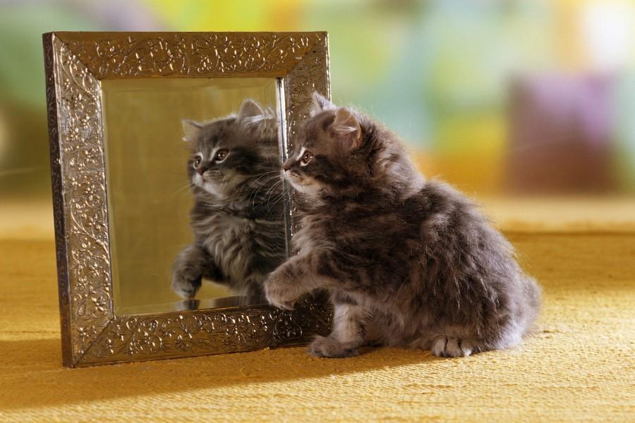 Gatito reflejado en el espejo