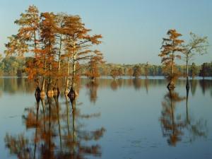 Cipreses en el lago Horseshoe (Illinois)