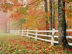 Árboles otoñales junto a la valla