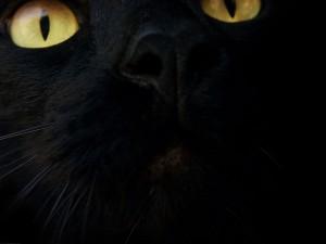 La cara de un gato negro