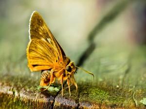 Mariposa posada sobre una madera con musgo