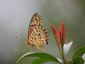 Bella mariposa sobre una hoja verde