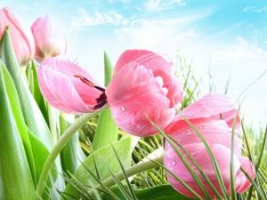 Tulipanes de color rosa en un jardín primaveral