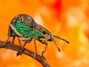 Escarabajo caminando sobre una ramita