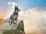 Perro contemplando el cielo