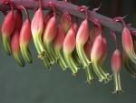 Bellas flores en floración