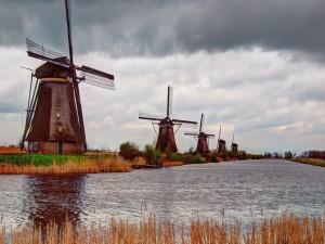 Molinos de viento a orillas del río