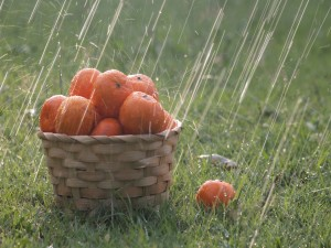 Cesta con naranjas bajo las gotas de lluvia