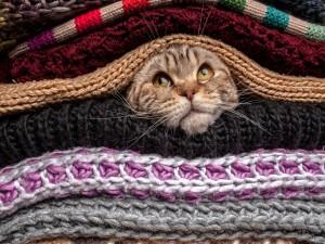 Gato atigrado entre una pila de bufandas