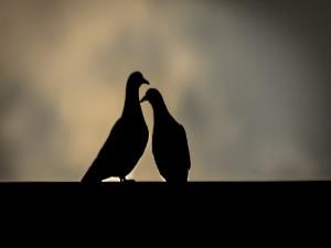 Silueta de dos palomas